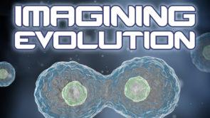 Imagining Evolution