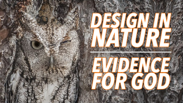Design in Nature - Creation Club